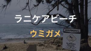 ラニケアビーチでウミガメに会う
